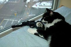 dangerous-home-cats-.jpg